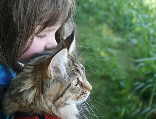 11 yr old Romesa's six page report: 'Why I would love a cat'